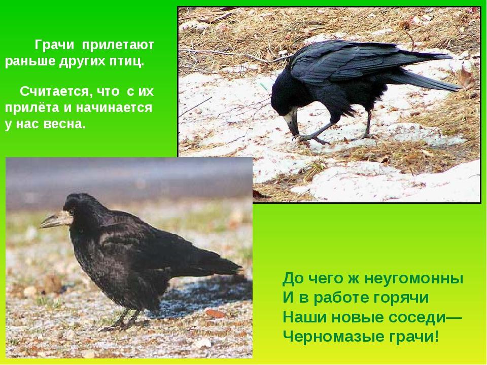 Грачи прилетают раньше других птиц. Считается, что с их прилёта и начинается...