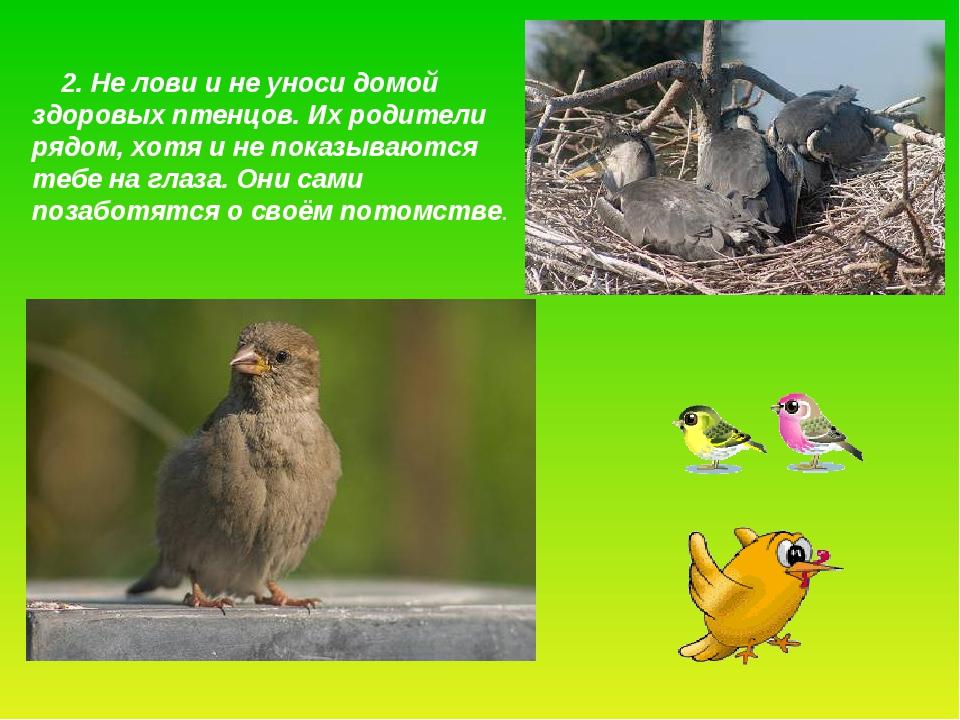 2. Не лови и не уноси домой здоровых птенцов. Их родители рядом, хотя и не п...
