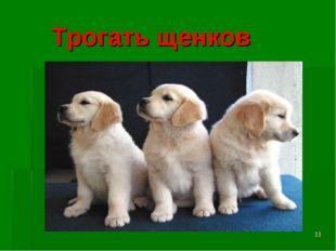 * Трогать щенков