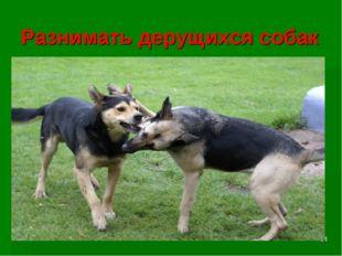 * Разнимать дерущихся собак