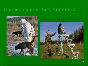 * Собаки на службе у человека