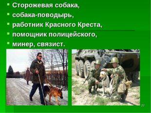 * Сторожевая собака, собака-поводырь, работник Красного Креста, помощник поли
