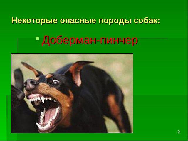 * Некоторые опасные породы собак: Доберман-пинчер