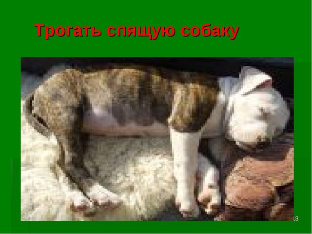 * Трогать спящую собаку