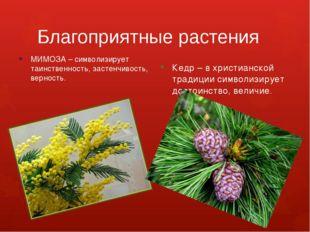 Благоприятные растения МИМОЗА – символизирует таинственность, застенчивость,