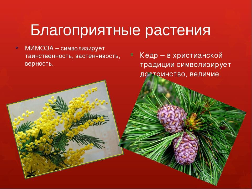 Благоприятные растения МИМОЗА – символизирует таинственность, застенчивость,...