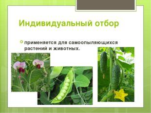 Индивидуальный отбор применяется для самоопыляющихся растений и животных.