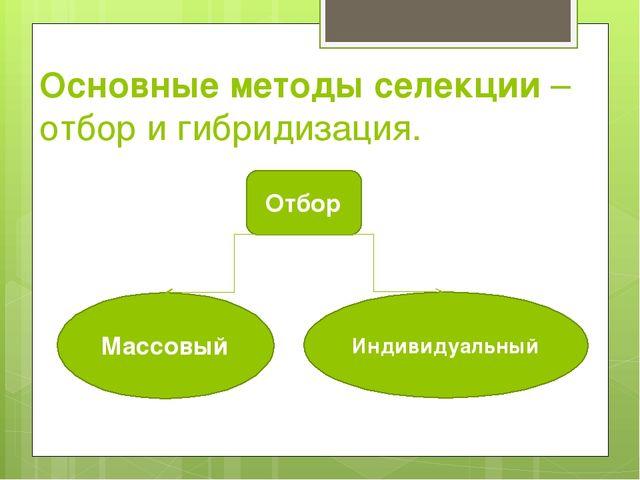 Основные методы селекции – отбор и гибридизация. Отбор Массовый Индивидуальный