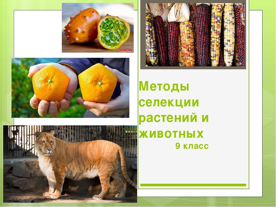 Методы селекции растений и животных 9 класс