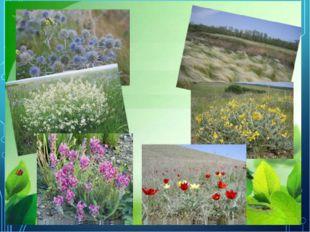 Гипотеза проекта – нарушение экологического равновесия в растительном многооб