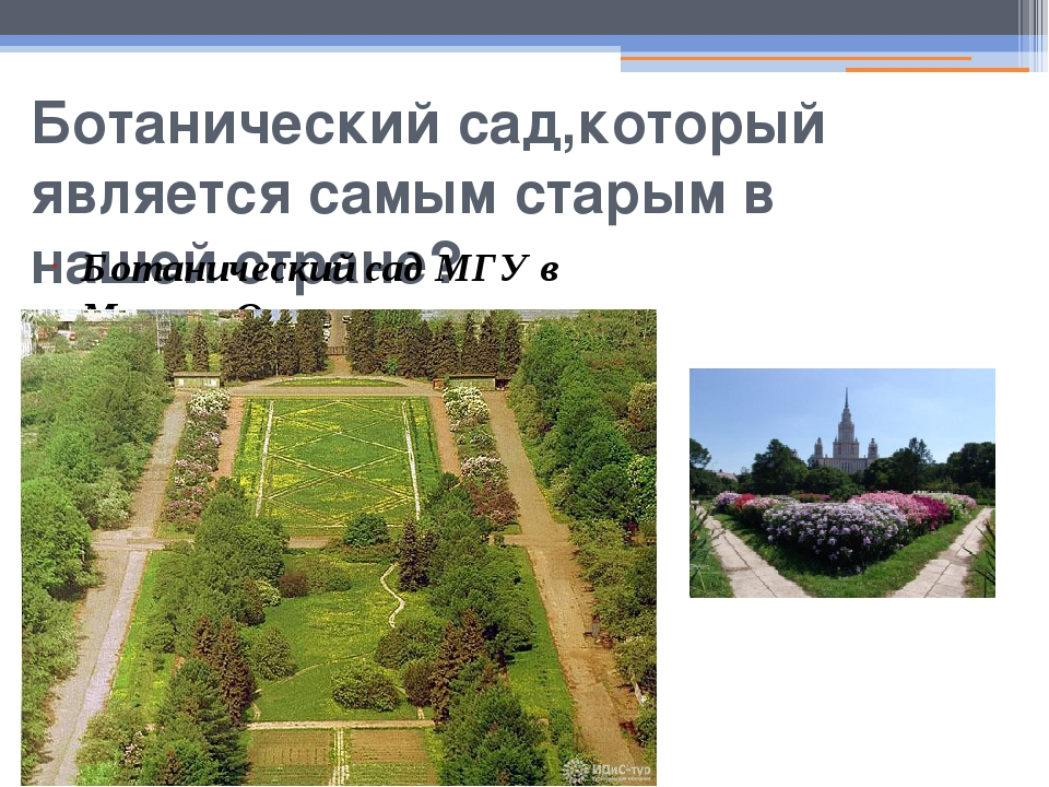 Ботанический сад,который является самым старым в нашей стране? Ботанический с...