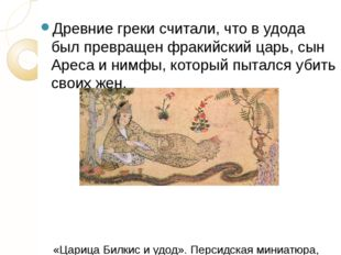 Древние грекисчитали, что в удода был превращен фракийский царь, сын Ареса и