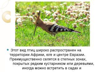 Этот вид птиц широко распространен на территории Африки, юге и центре Еврази