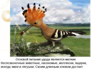 Основой питания удода являются мелкие беспозвоночные животные, насекомые,
