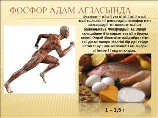 1 – 1,5 г Фосфор — күш-қуат көзі. Қаңқаның мықтылығы құрамындағы фосфор мен к