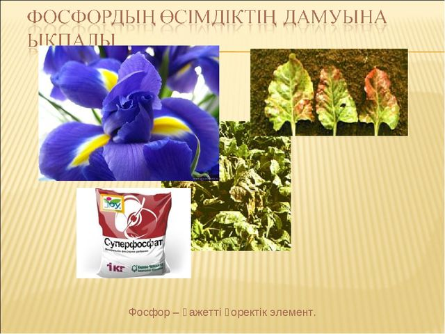 Фосфор – қажетті қоректік элемент.