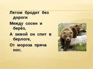 Летом бродит без дороги Между сосен и берёз, А зимой он спит в берлоге, От мо