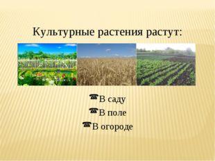 Культурные растения растут: В саду В поле В огороде