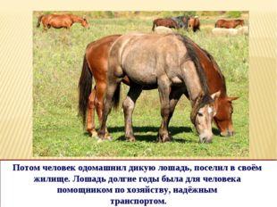 Потом человек одомашнил дикую лошадь, поселил в своём жилище. Лошадь долгие г