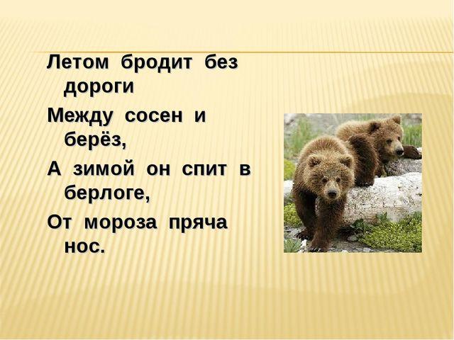 Летом бродит без дороги Между сосен и берёз, А зимой он спит в берлоге, От мо...