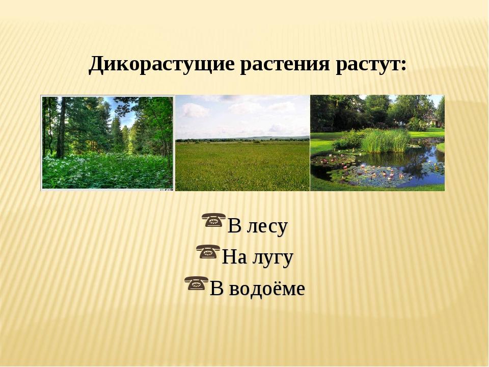 Дикорастущие растения растут: В лесу На лугу В водоёме