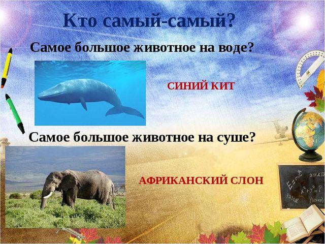 Кто самый-самый? Самое большое животное на воде? СИНИЙ КИТ Самое большое живо...