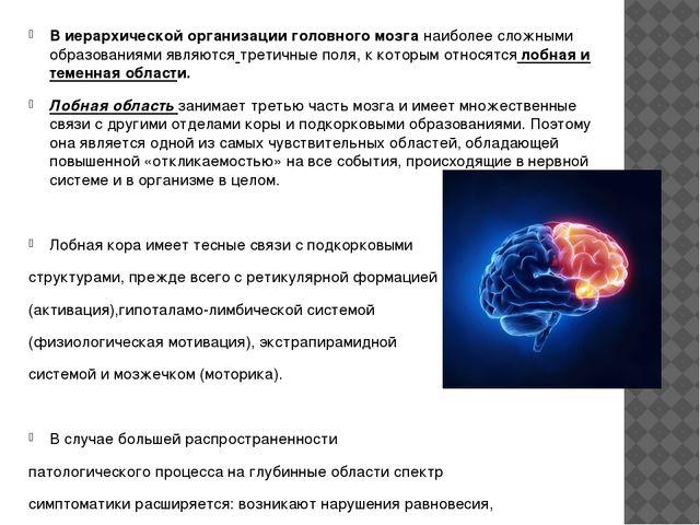 В иерархической организации головного мозга наиболее сложными образованиями я...