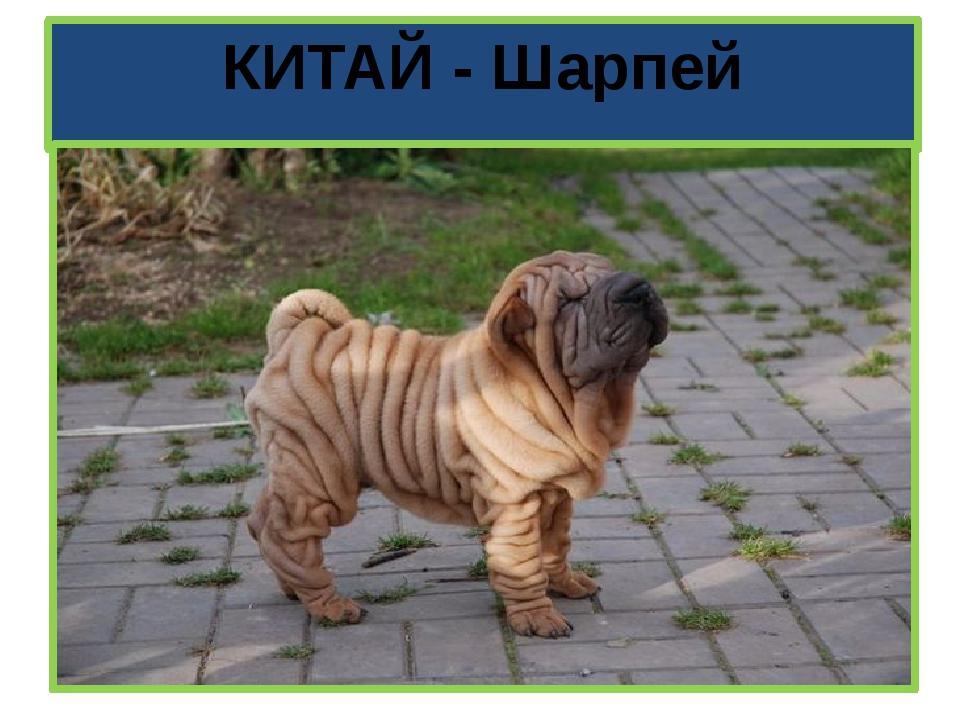 КИТАЙ - Шарпей