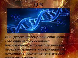 ДНК ДНК (дезоксирибонуклеиновая кислота) - это одна из трех основных макромол