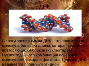 ДНК С точки зрения химии ДНК - это полимерная молекула большой длины, которая