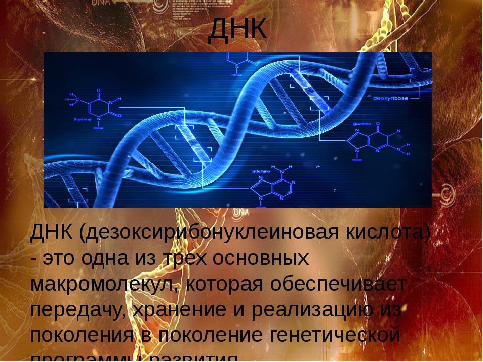 ДНК ДНК (дезоксирибонуклеиновая кислота) - это одна из трех основных макромол...