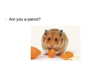 Are you a parrot?