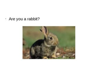 Are you a rabbit?