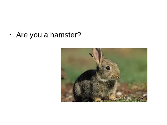 Are you a hamster?