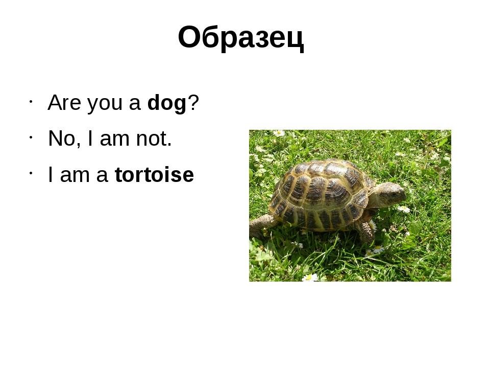 Образец Are you a dog? No, I am not. I am a tortoise