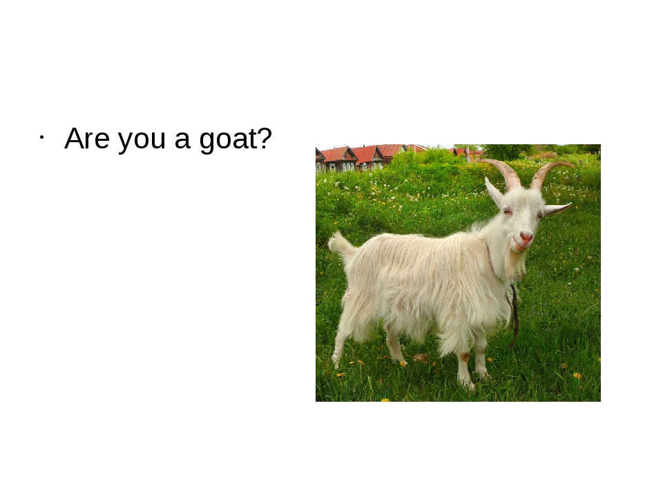 Are you a goat?