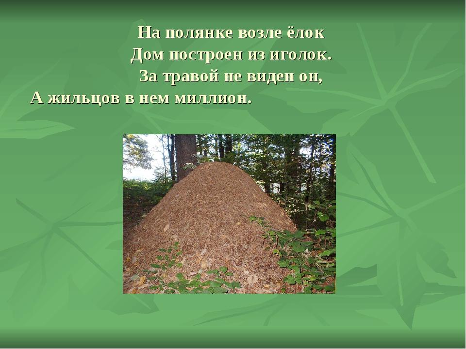 На полянке возле ёлок Дом построен из иголок. За травой не виден он, А жильцо...