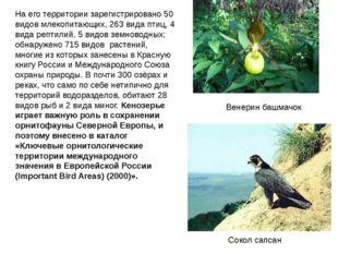 На его территории зарегистрировано 50 видов млекопитающих, 263 вида птиц, 4 в