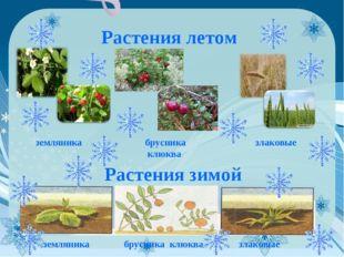 Растения летом земляника брусника клюква злаковые Растения зимой земляника бр