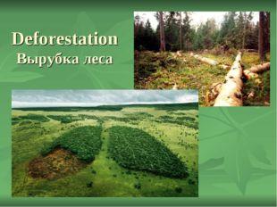 Deforestation Вырубка леса