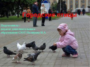 Городские птицы Подготовила : педагог дополнительного образования СЮТ Поляков