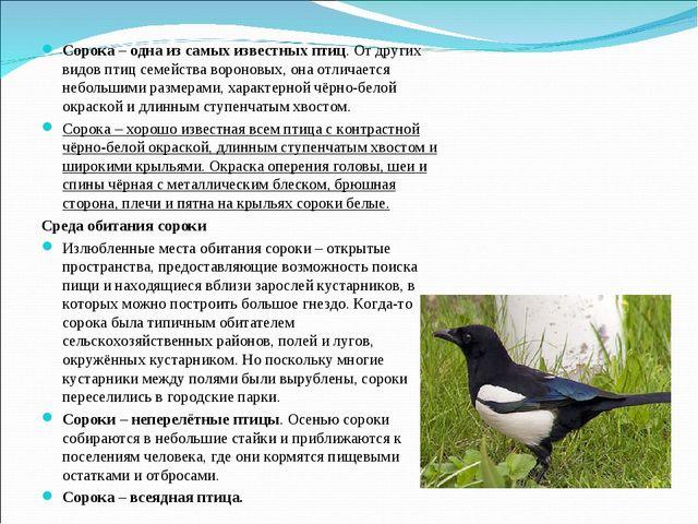 Сорока – одна из самых известных птиц. От других видов птиц семейства воронов...