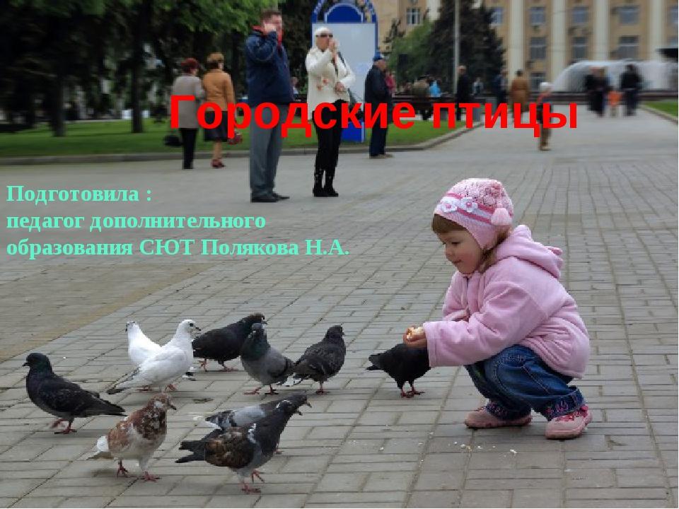 Городские птицы Подготовила : педагог дополнительного образования СЮТ Поляков...