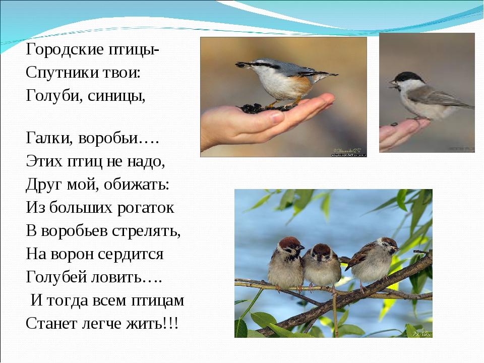 Городские птицы- Спутники твои: Голуби, синицы, Галки, воробьи…. Этих птиц не...