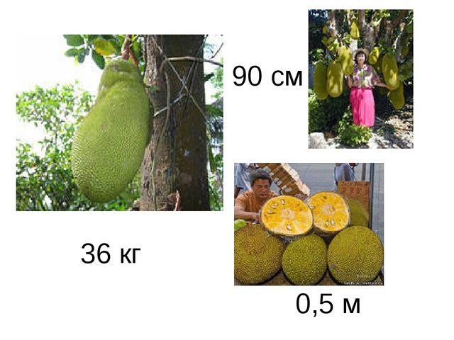 36 кг 90 см 0,5 м