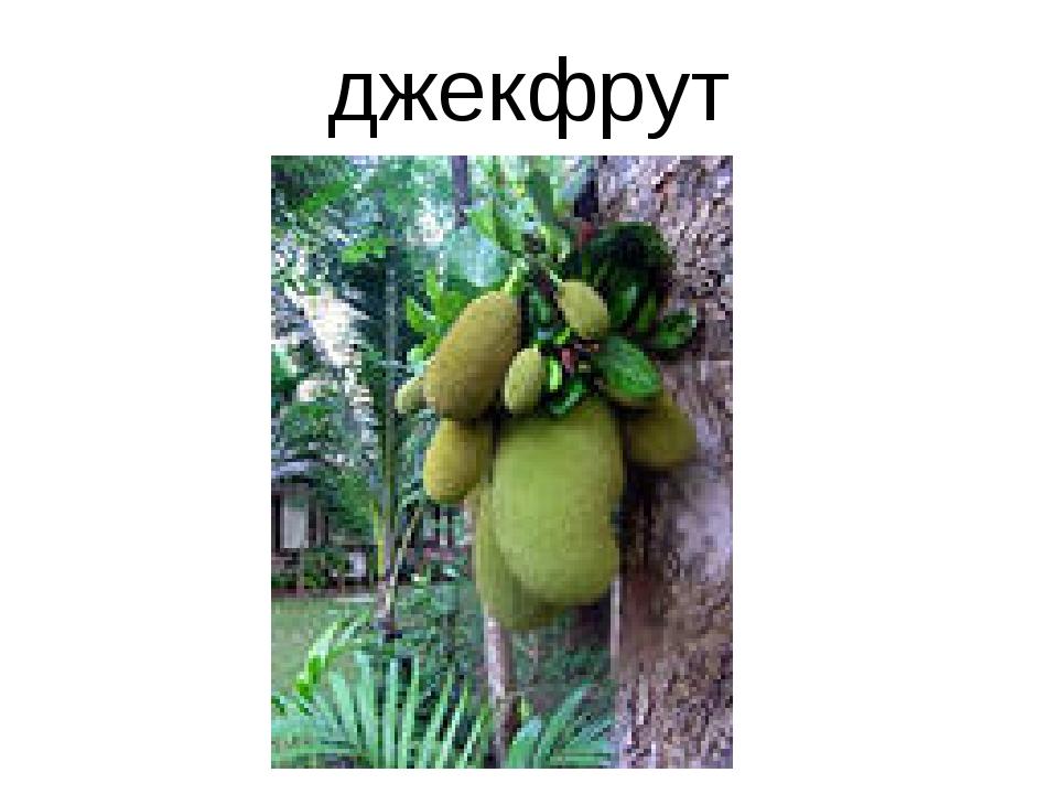 джекфрут