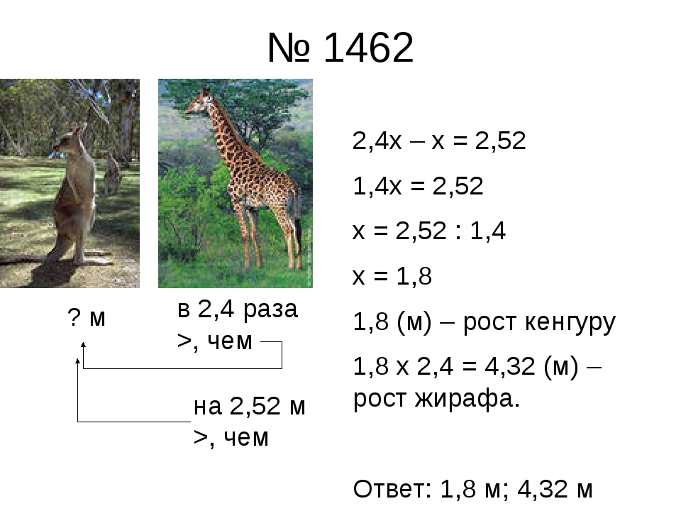 № 1462 2,4х – х = 2,52 1,4х = 2,52 х = 2,52 : 1,4 х = 1,8 1,8 (м) – рост кенг...