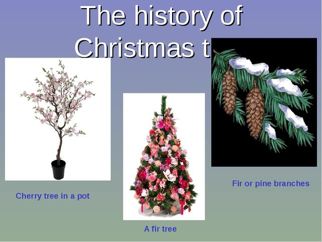 The history of Christmas tree Cherry tree in a pot Fir or pine branches A fir...