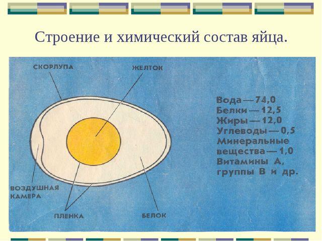 Строение и химический состав яйца.