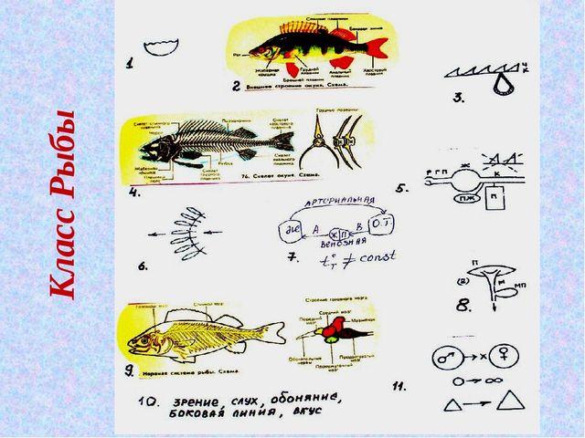 Класс Рыбы